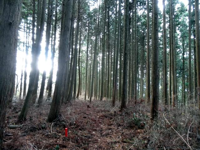 f:id:Hanamaru:20161215145305j:plain