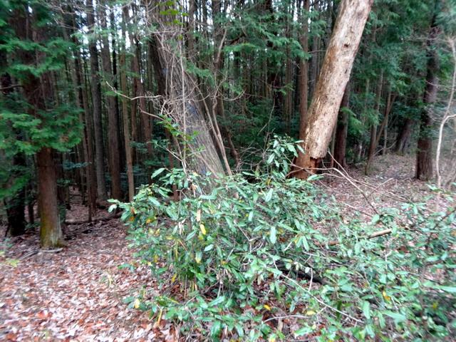 f:id:Hanamaru:20161229124721j:plain