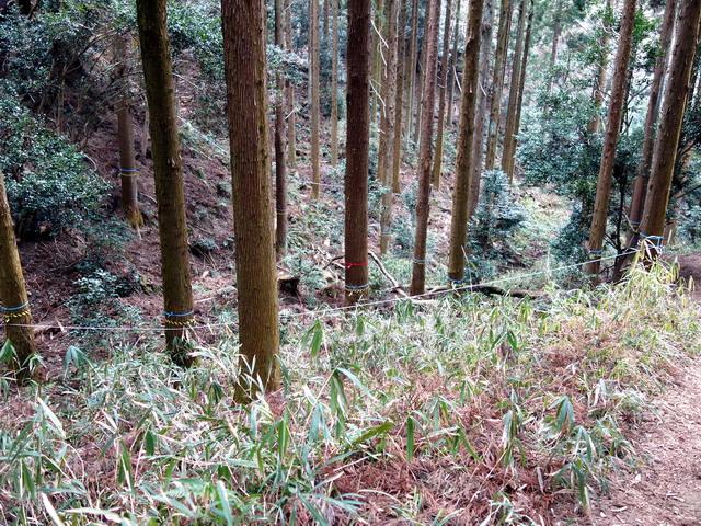 f:id:Hanamaru:20170318140037j:plain