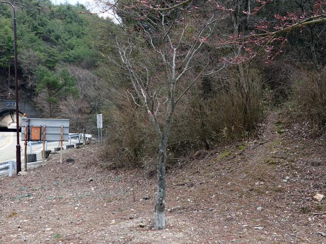 f:id:Hanamaru:20170413120235j:plain