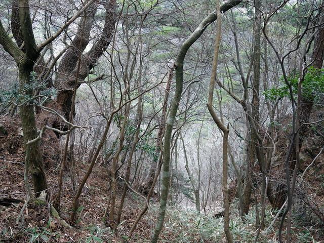 f:id:Hanamaru:20170413120616j:plain