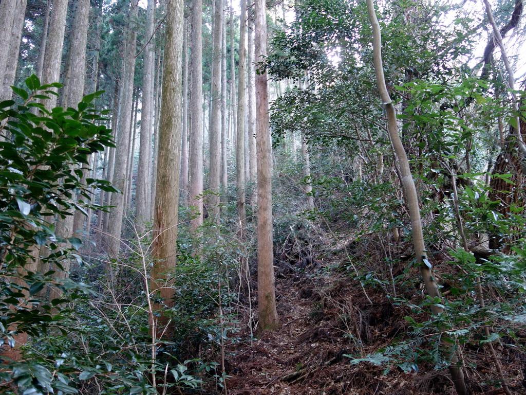 f:id:Hanamaru:20200113110626j:plain