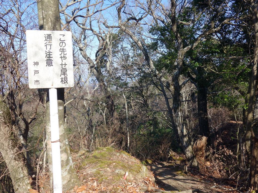 f:id:Hanamaru:20200113122556j:plain