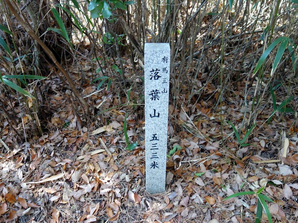 f:id:Hanamaru:20200113123732j:plain
