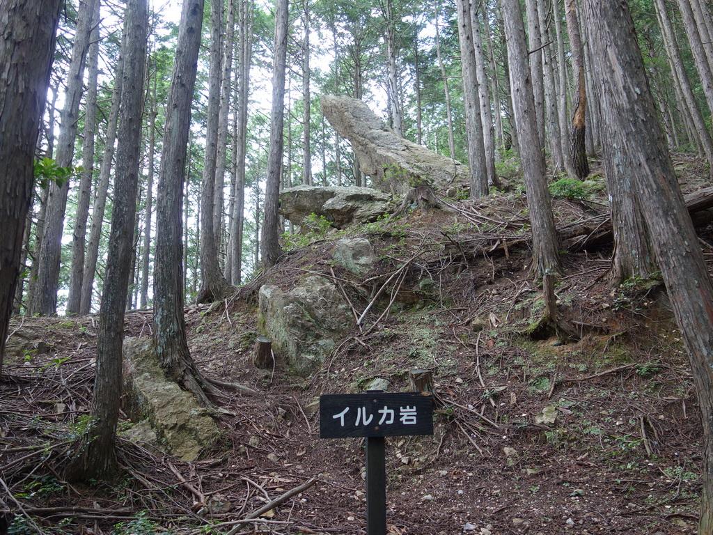 f:id:Hanamaru:20210624125936j:plain