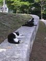 [旅][ねこ]緑ヶ丘公園で寝ていたねこたち