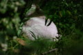 [ねこ]茂みの中のねこ