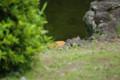 [ねこ]日比谷公園の背中だけ見えてるねこ