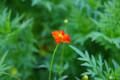 [散歩][花]浜離宮の花