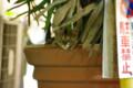 [ねこ]銀座のこねこは植木の中