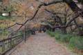 [散歩]紀尾井坂の上には桜並木