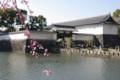 [散歩][花]皇居東御苑
