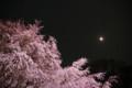 [散歩][花]六義園 しだれ桜と大名庭園のライトアップ