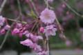 [散歩][花]小石川後楽園