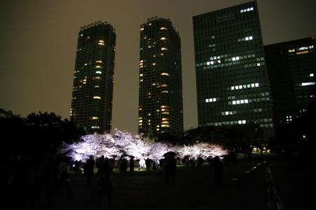 浜離宮 ソメイヨシノのライトアップ