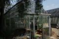 [花]小石川植物園 温室