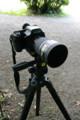 [カメラ]645Dを借りて新宿御苑