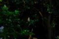 [ねこ]銀座のねこ