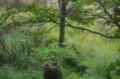 [旅][散歩]フエゴ国立公園 ビーバーに削られた木