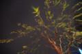 [花]銀座の柳