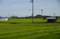 [うおがし銘茶][イベント]新茶塾 2011 第2回 牧の原台地