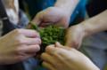 [うおがし銘茶][イベント]新茶塾 2011 第2回 第二工場 蒸機で蒸された茶葉
