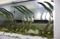 [うおがし銘茶][イベント]新茶塾 2011 第2回 第二工場 粗揉機