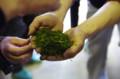 [うおがし銘茶][イベント]新茶塾 2011 第2回 第二工場 揉捻機の中のお茶