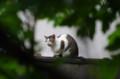 [散歩][ねこ]旧岩崎邸庭園のねこ