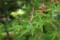 皇居東御苑の楓