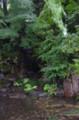 [散歩][花]旧古河庭園
