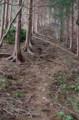 [散歩]堂所山山頂のすぐ先