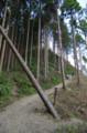 [散歩]景信山山頂のすぐ先