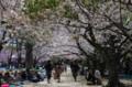 [旅][花]舞鶴公園で花見