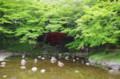 [花]小石川後楽園 渡月橋