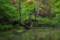 新宿御苑 母と子の森