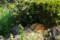 日比谷公園のねこ