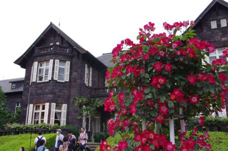 旧古川庭園 春のバラフェスティバル