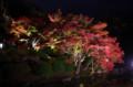 [旅][散歩]栗林公園 紅葉ライトアップ