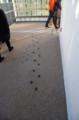 [旅]京都水族館 ペンギンのいるところへ足跡をたどる
