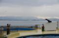 [旅][散歩]マリンワールド海の中道 アシカ・イルカショー