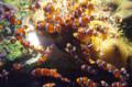 [旅][散歩]マリンワールド海の中道 カクレクマノミ