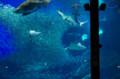 [旅][散歩]マリンワールド海の中道 パノラマ大水槽