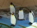 [旅][散歩]福岡市動植物園 キングペンギン