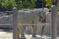 [旅][散歩]福岡市動植物園 ゾウ