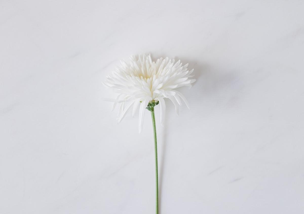 f:id:Hanashino:20201125144220j:plain