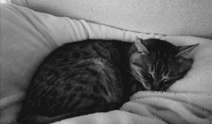 布団に蹲る猫
