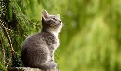 たたずむ子猫