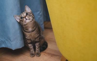 布の間に座る猫