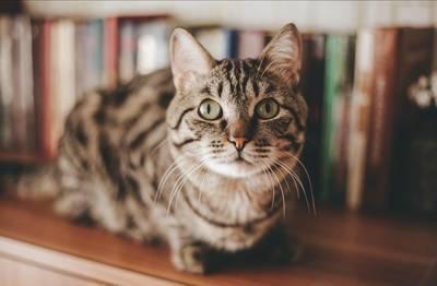 棚の上の猫